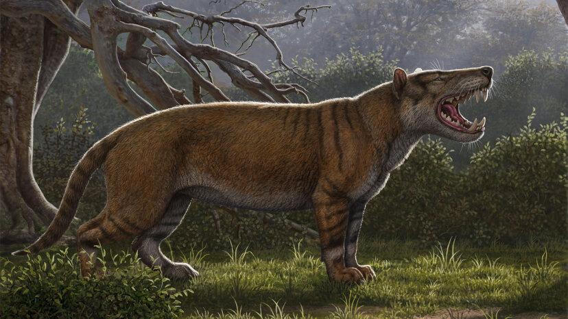 Prähistorisches Raubtier in Museumsschublade wiederentdeckt