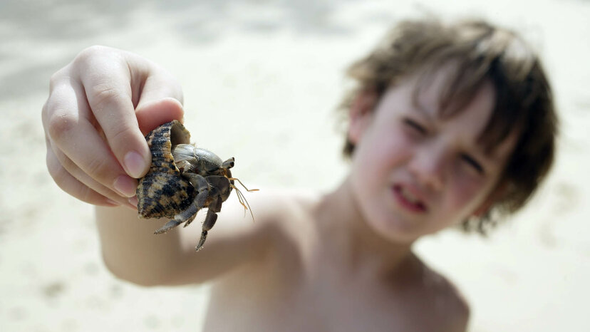 boy with hermit crab