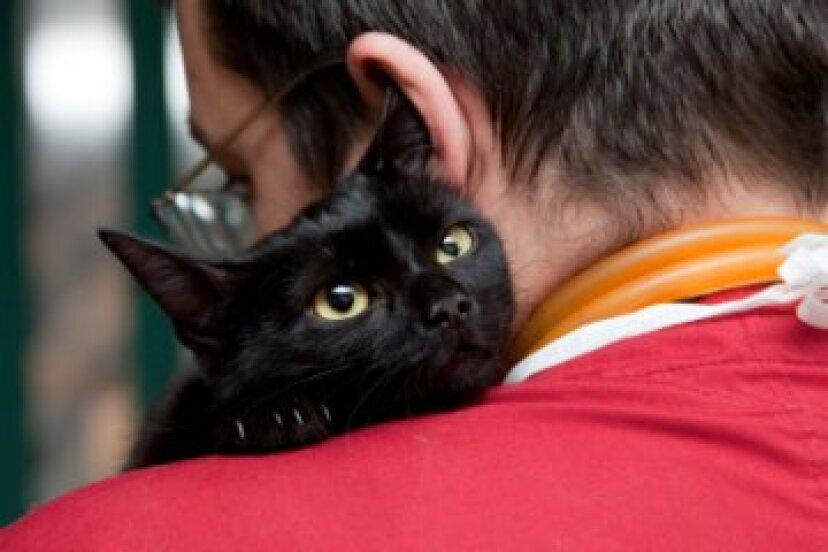 猫のための家庭薬