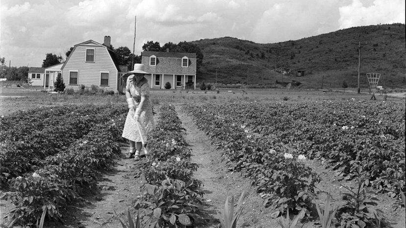 Free Land: Cómo la Ley de Homestead ayudó a Estados Unidos a expandirse hacia el oeste