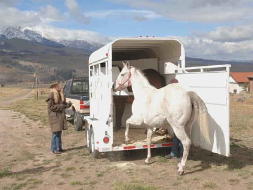 馬のトレーラー牽引