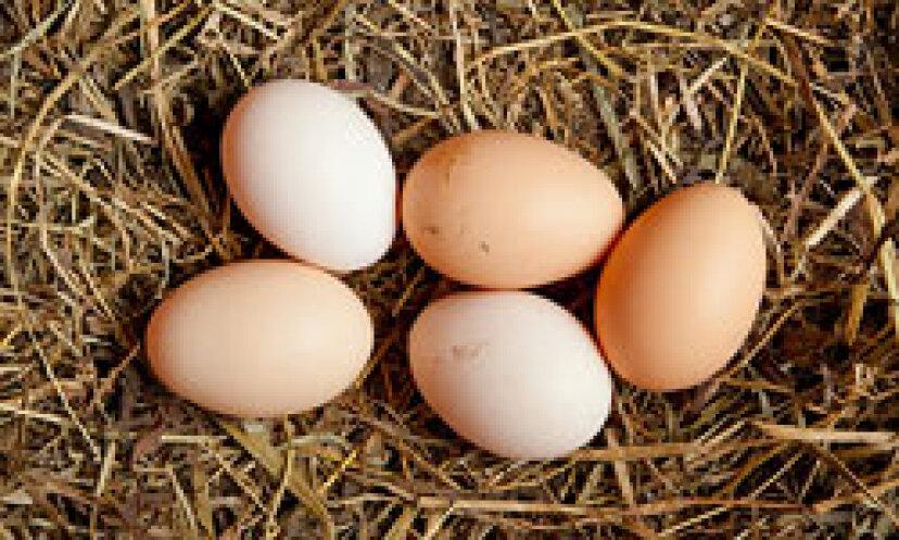 鶏から卵を集める方法