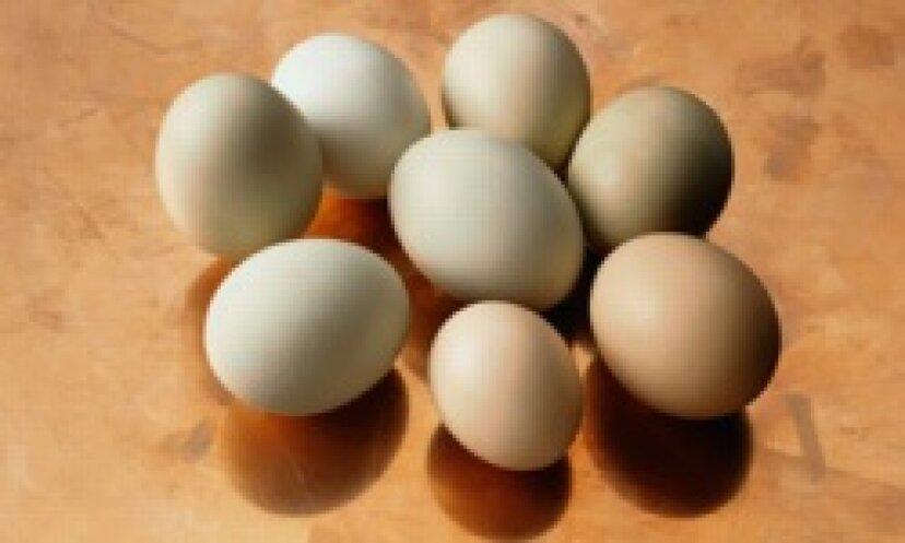 子供の卵アレルギーの症状は何ですか?