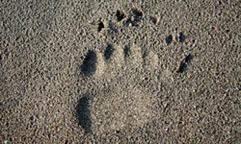 クマを追跡する方法