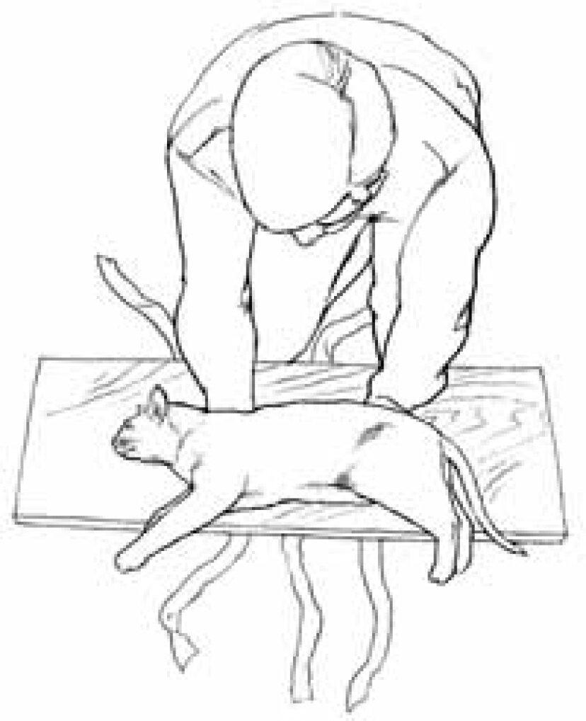 背中が折れた猫の治療法:ヒント