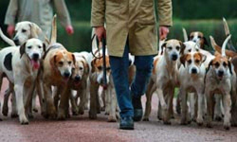 トップ10の狩猟犬の品種