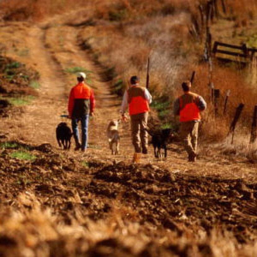 犬との狩猟入門