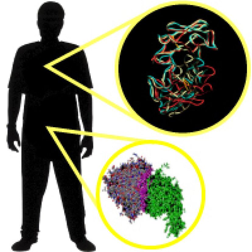 免疫システムのしくみ