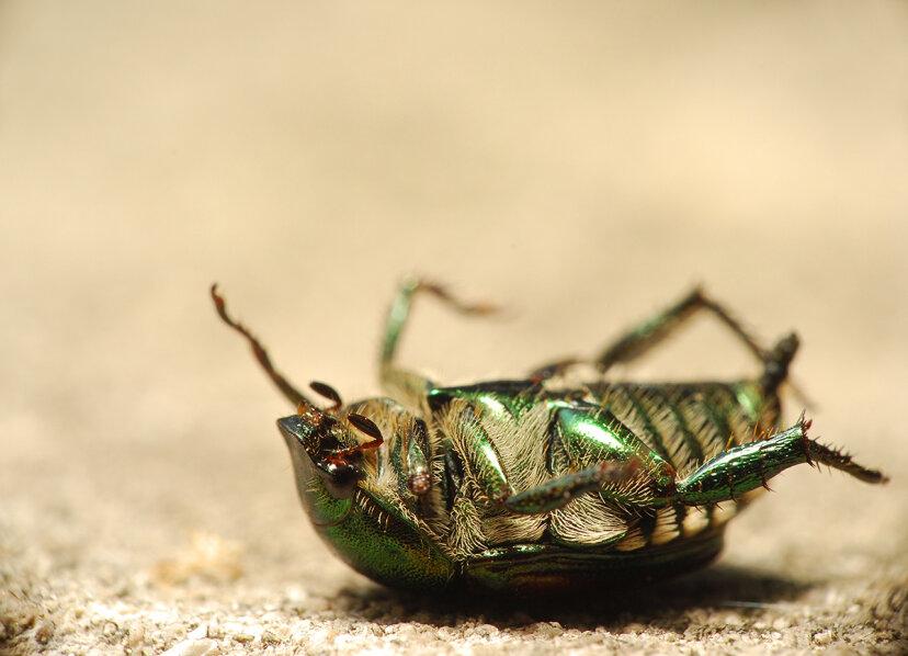 昆虫が惑星から姿を消した場合はどうなりますか?