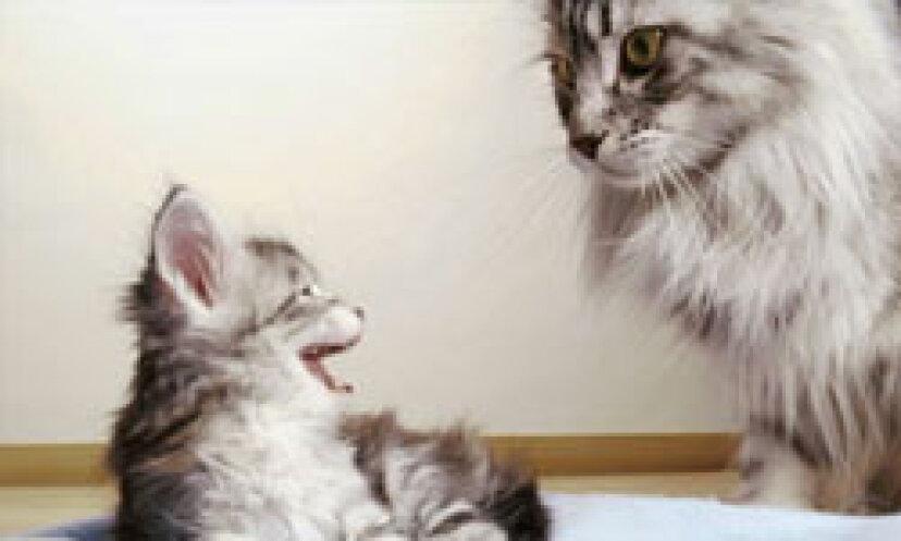 どうすれば私の猫の皮屑アレルギーをうまくコントロールできますか?