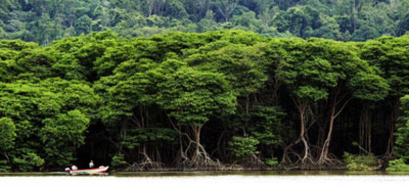 ジャングルで生き残る方法