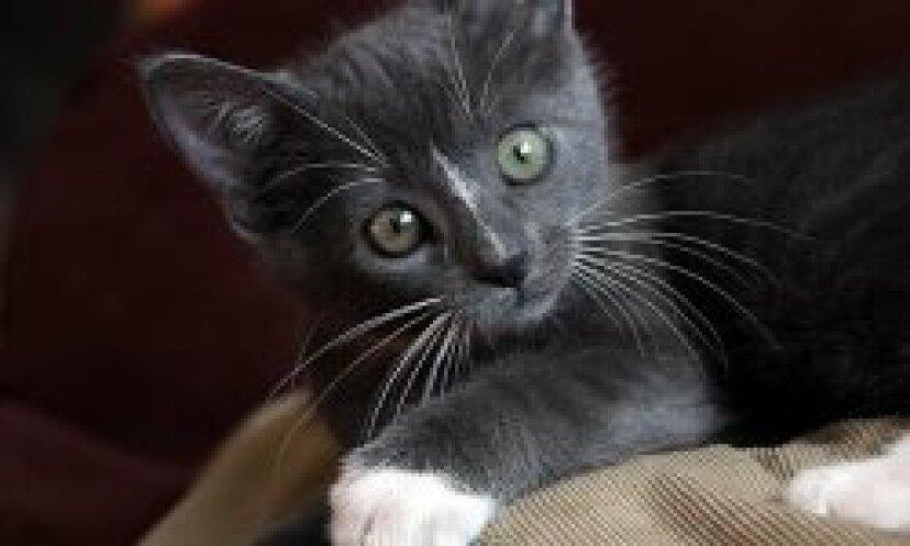 下痢の猫の治療法:ヒントとガイドライン