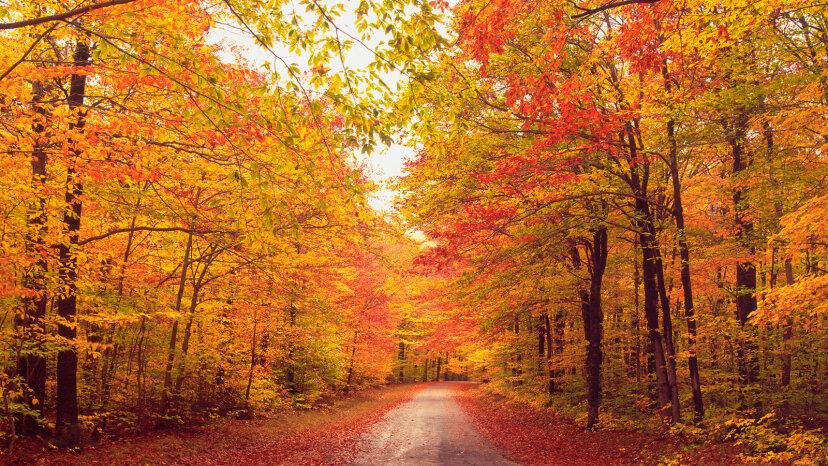 ¿Por qué las hojas cambian de color y se vuelven rojas?