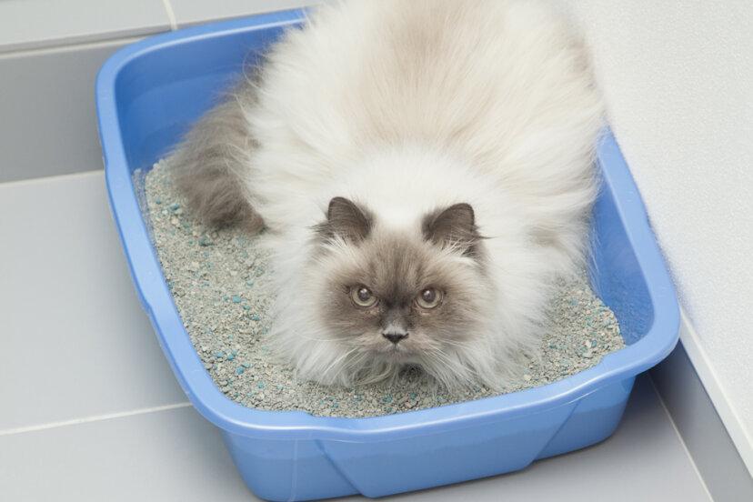 猫のトイレ問題の5つの原因