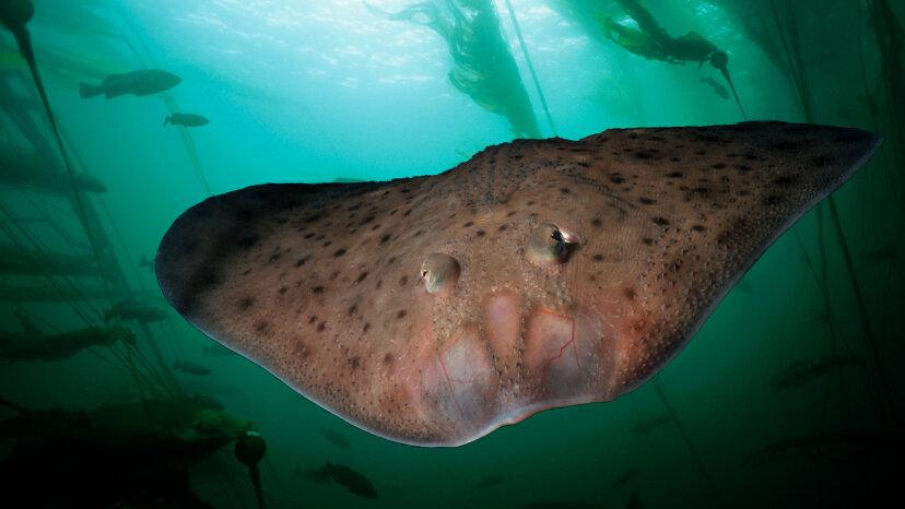 Alter Fisch stolzierte Meeresboden vor Landtieren
