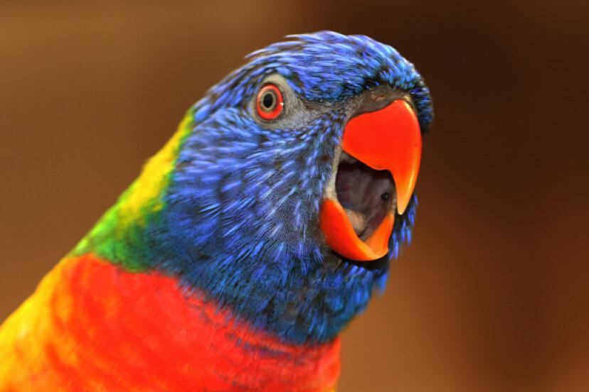 鳥についての10の迷信
