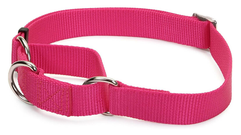 マーチンゲールの首輪は人間であり、犬の親友です