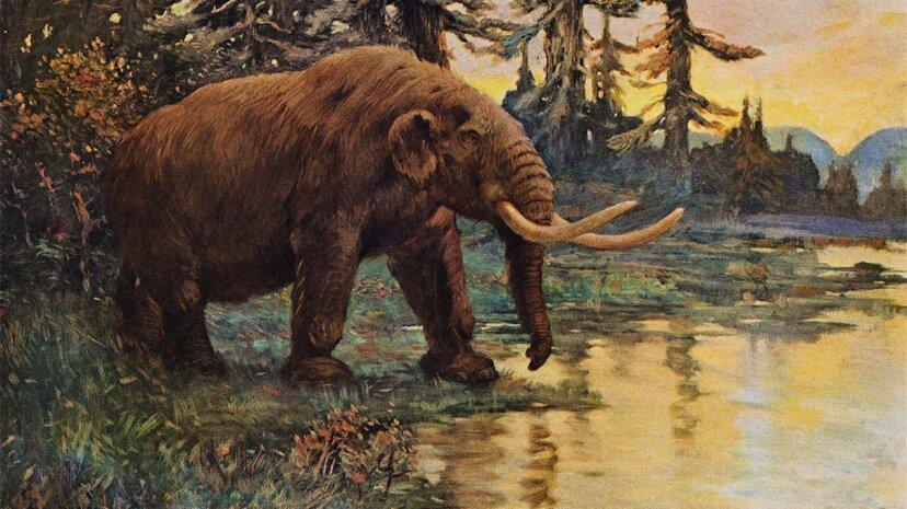 Der Mastodon Boneyard, der Thomas Jeffersons Herz gestohlen hat