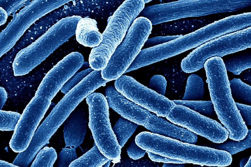 微生物を使って病気と戦うことはできますか?
