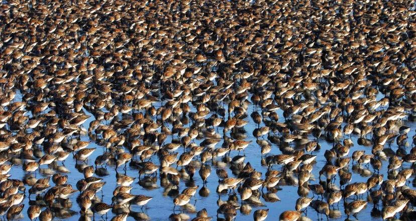 Nature Conservancy wetland program