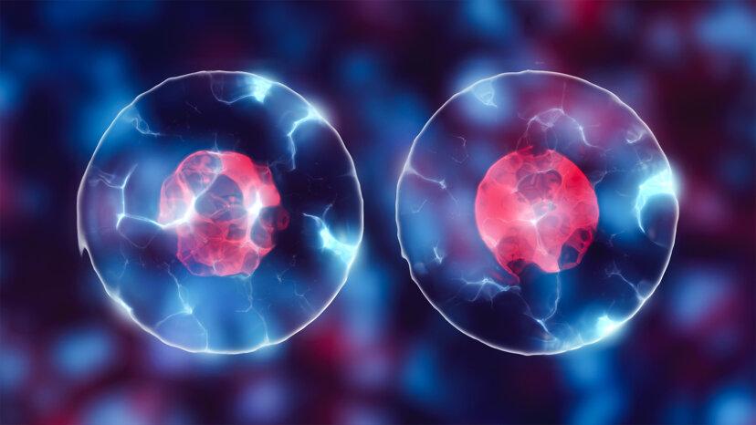 mitosis, meiosis