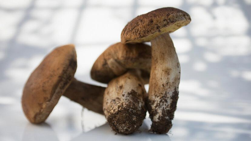 Pilze: Waschen oder abbürsten?