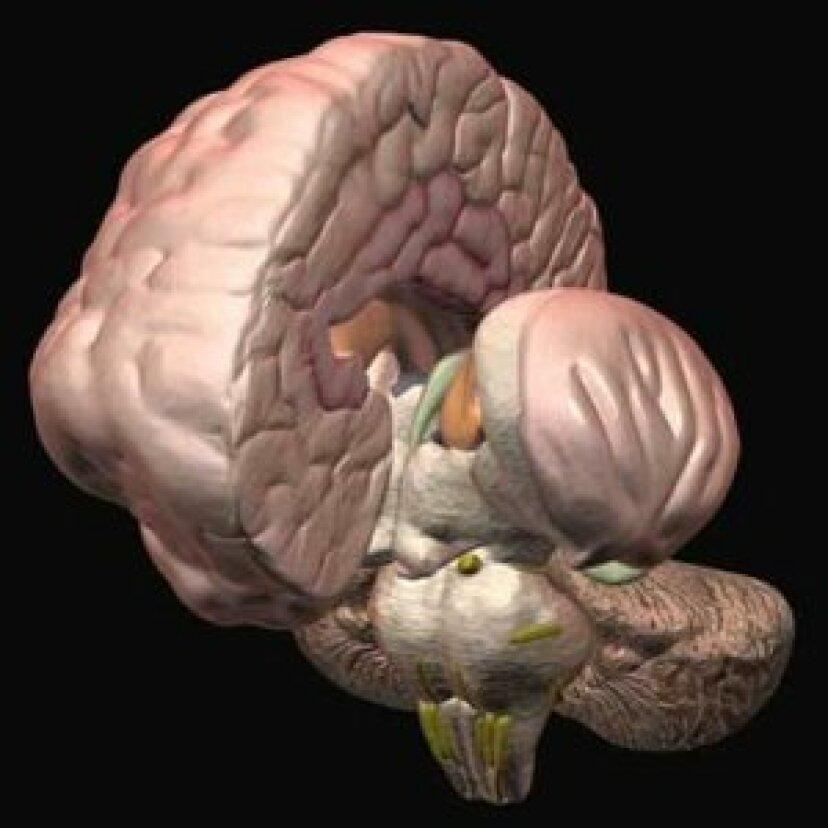 脳疾患患者の興奮とうつ病