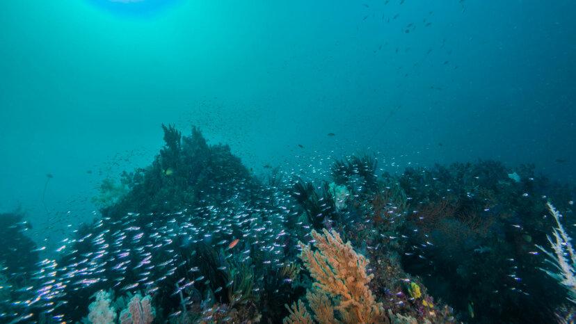 Wir haben endlich das Summen am Meeresgrund aufgenommen