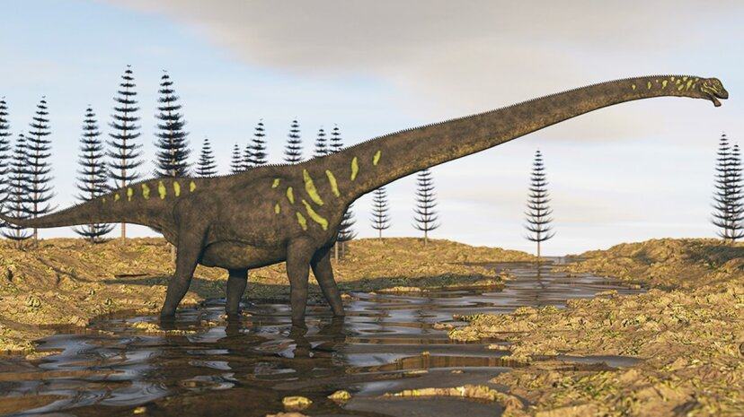This artist's rendition depicts a Mamenchisaurus, a sauropodian dinosaur that lived in what is today China; researchers recently discovered footprints in Australia that came from a large sauropod. StockTrek Images/Getty Images