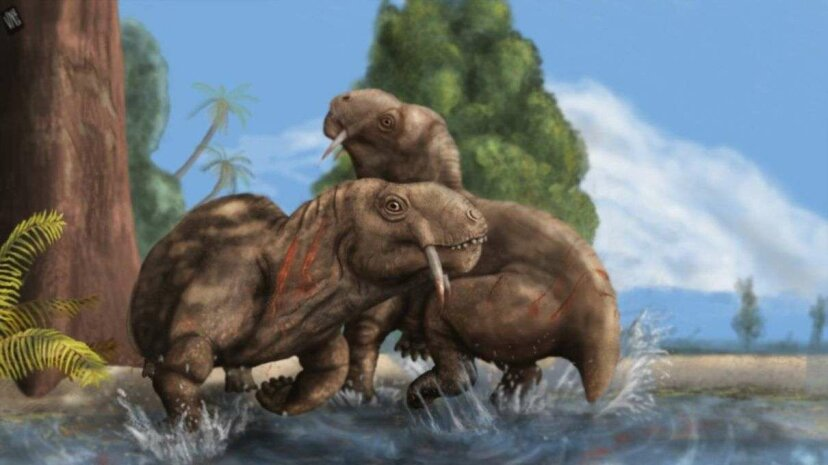 An artist's rendering of two members of Tiarajudens eccentricus family fighting. University of the Witwatersrand (South Africa)