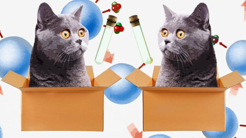 The 'cats' in the Yale team's experiment were actually entangled subatomic particles linked by a superconducting channel. Korionov/Designs Stock/Chaiwat Photos/Thinkstock