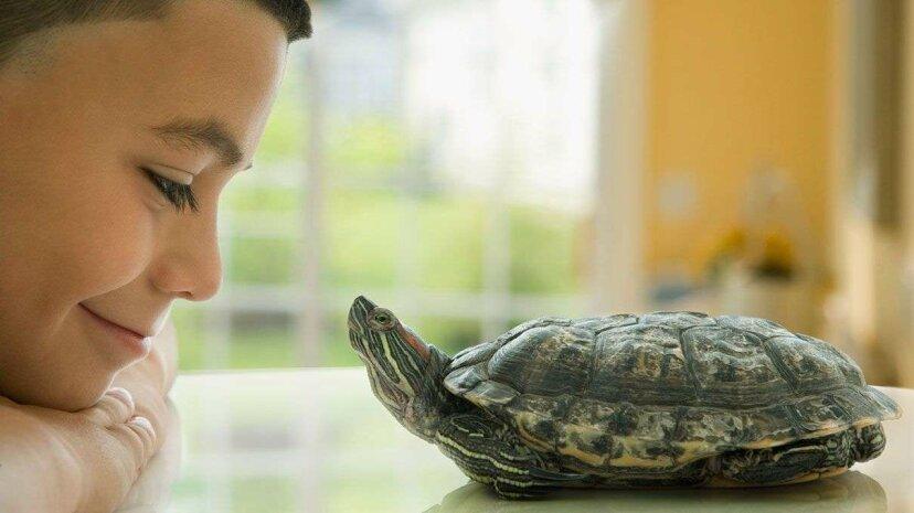 Die wahren Gründe, warum Schildkröten Muscheln haben (Hinweis, es ist nicht zum Schutz)
