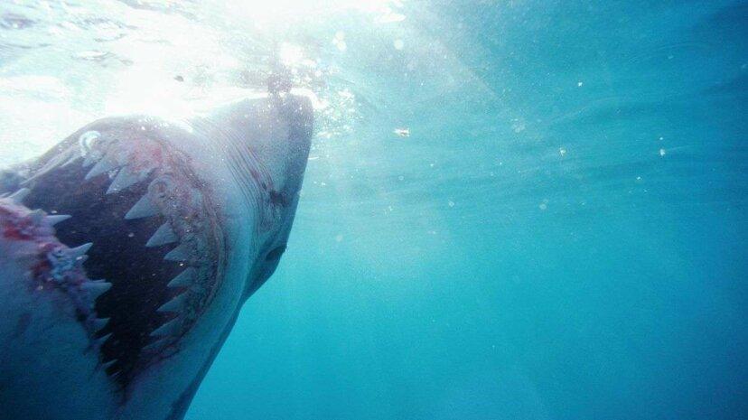 Bedeutet eine neue zweiköpfige Hai-Entdeckung, dass es Zeit ist, ernsthaft auszuflippen?