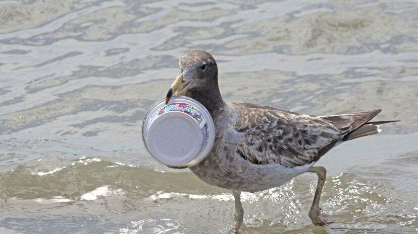 海鳥がプラスチックを食べる臭い理由があります