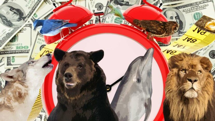 Lions, and dolphins and bears, oh my? A new book says that knowing which chronotype you belong to will let you know the best time to do anything. Hynci/Kojihirano/Bazilfoto/PrinPrince/Paket/Anankkmi/GlobalP/DrPAS/Thinkstock