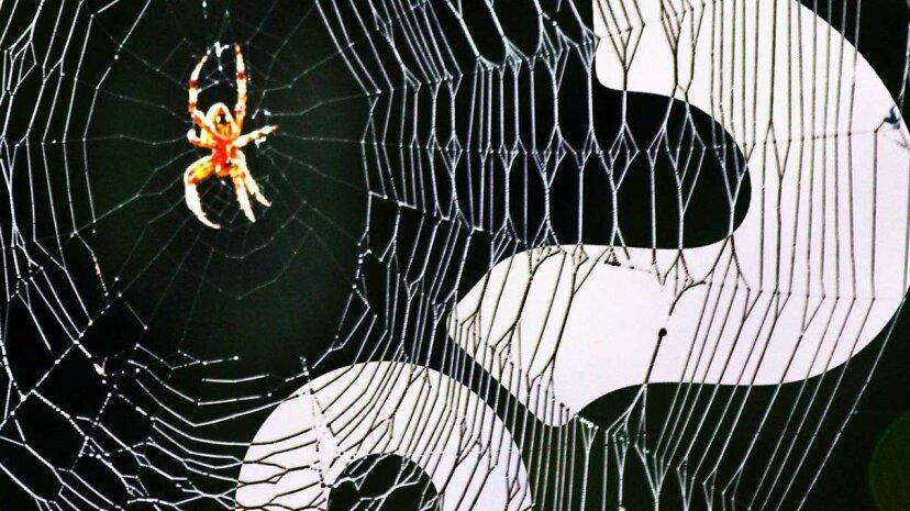 Spinnen können durch Oversharing aussterben