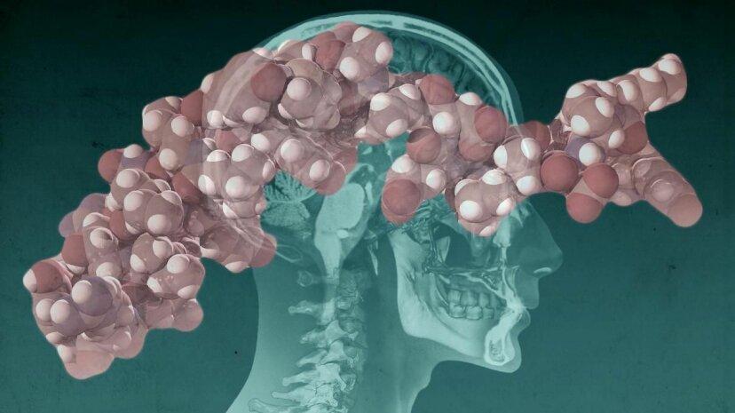 私たちの脳のホルモンは脂肪燃焼の鍵ですか?