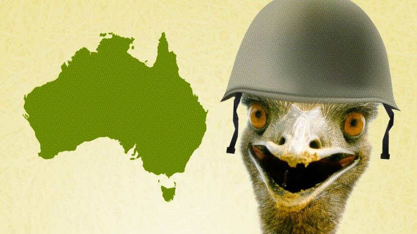 Western Australia's war to save wheat pitted veterans-turned-farmers against ... emus. PaulHart/Batareykin/iStock