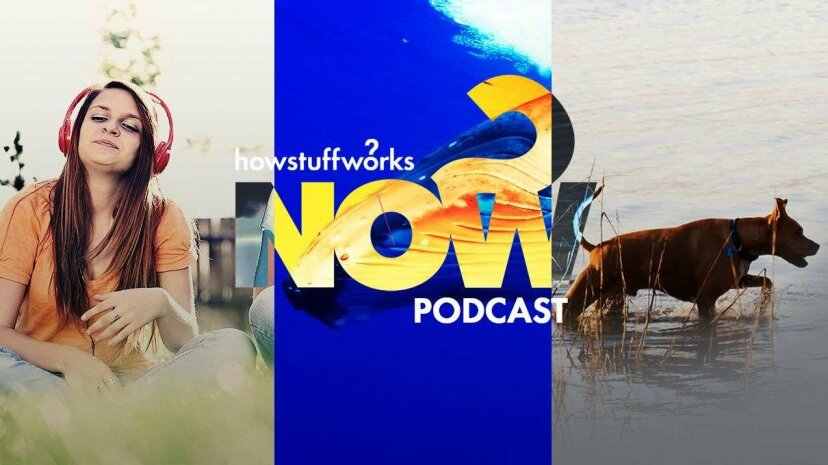 Hear and Now: Dogs Are Guinea Worm's Best Friend?  HowStuffWorks