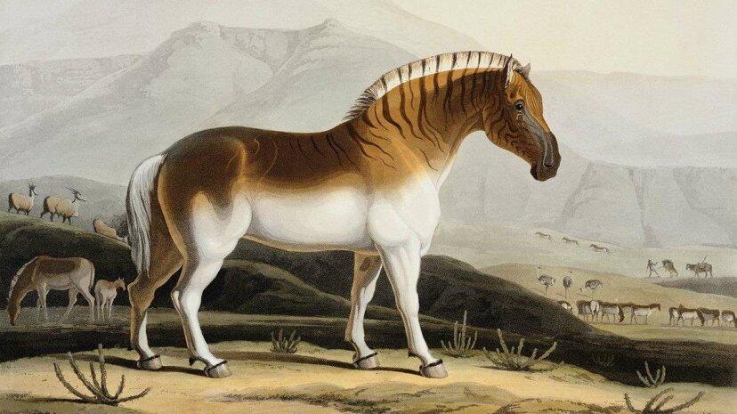 Wie die Quagga, eine ausgestorbene Zebra-Unterart, wiederbelebt wird