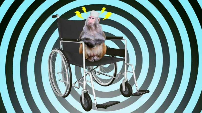 Scientists have shown primates can control robotic wheelchairs with their minds, which has implications for human brain-machine interfaces. China Photo Press/Getty/Nurthuz/Thinkstock