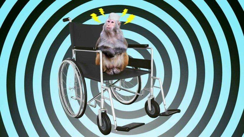 Neue Studie: Affen können mithilfe von Gedankenkontrolle Roboter-Rollstühle fahren