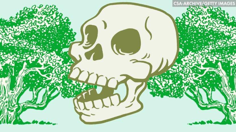 あなたの死体を木に変えてください!