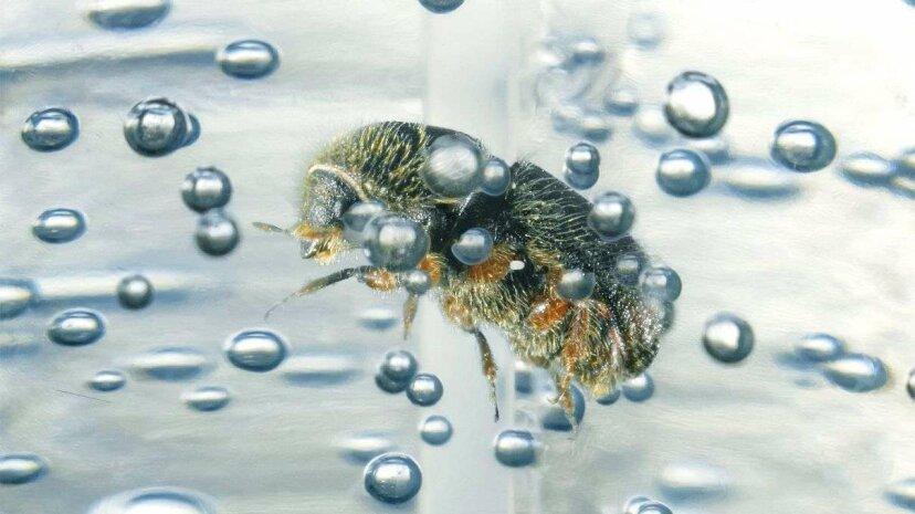 手指消毒剤は昆虫のDNAを保存するのに優れています