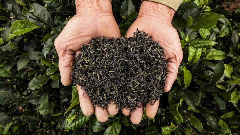 Warum die Viktorianer dachten, grüner Tee verursacht Halluzinationen