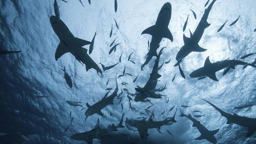 Wir wissen viel weniger über Haie als Sie vielleicht denken