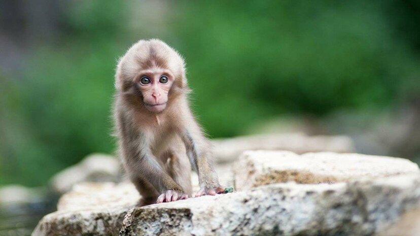 Beobachten Sie, wie neugeborene Affen im Schlaf lächeln wie menschliche Babys