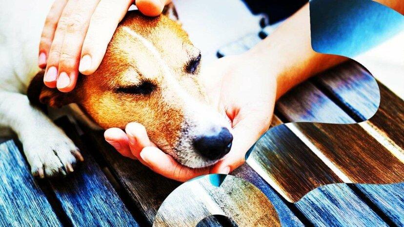 犬は何を好むか:食べ物か賞賛か?