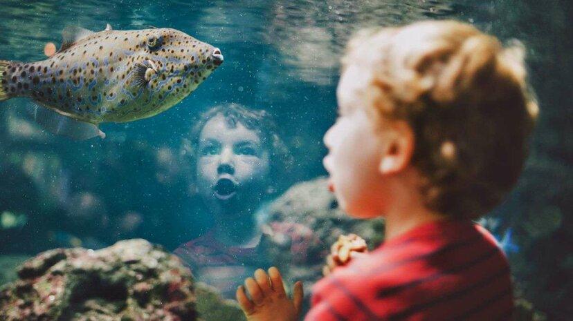 魚は個々の人間の顔を認識できる、科学者は発見する