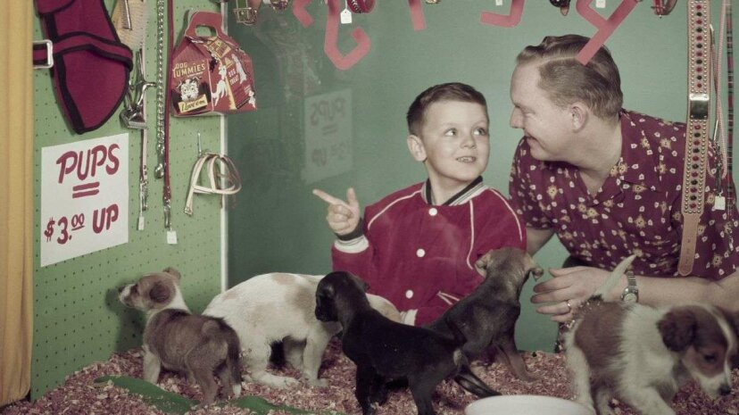 The interior of a pet store window, circa 1957. Harold M. Lambert/Getty Images